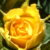 Illustration du profil de Bruno D.